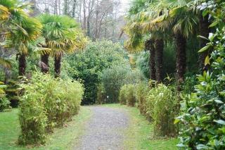 palms and bamboos glengarriff